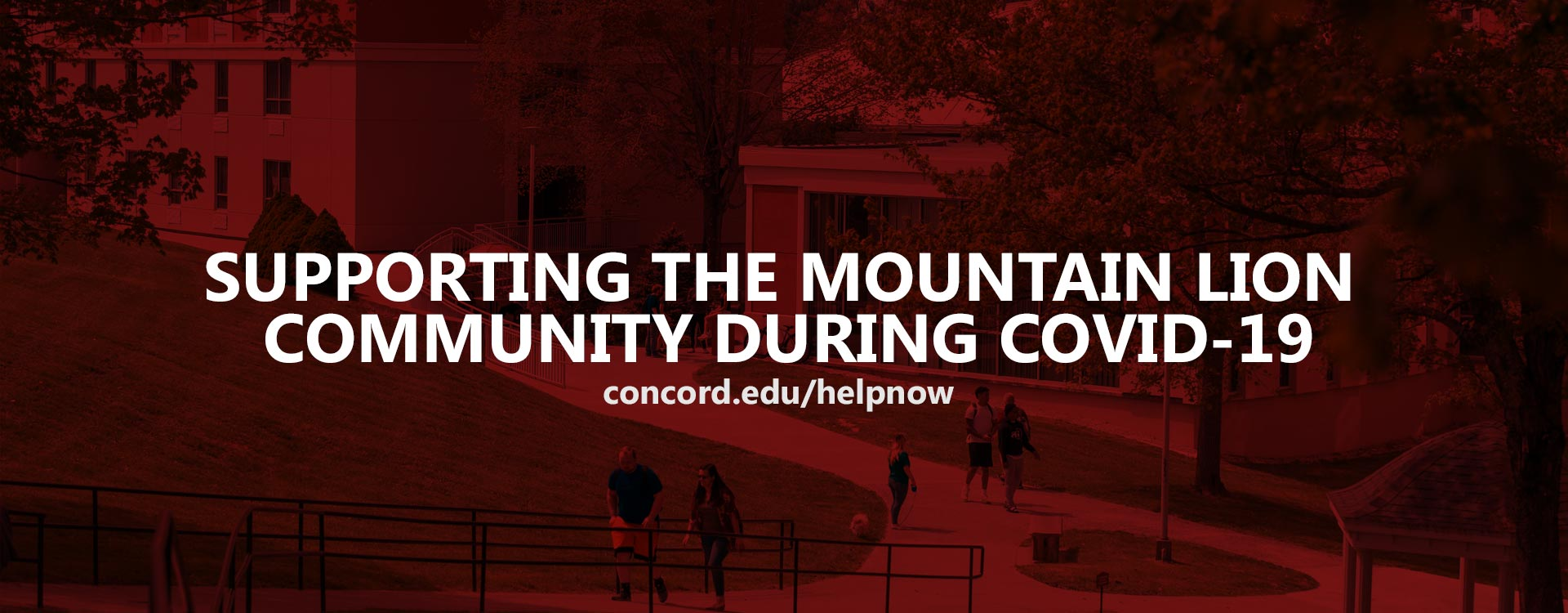 Supporting the Mountain Lion Community